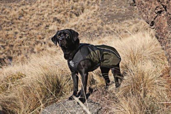 Arma-Doggo - bunda pro psy - Red/ Blk - X-Large