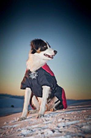 Puff-Doggy - zateplená bunda - Lime/ Blk - X-Large