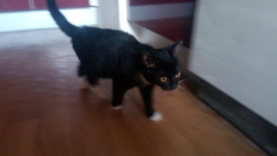Něžná a hravá kočička Cookie hledá domov