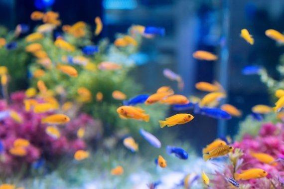 Akvárium na zakázku 150x45x50 ( d, š, v )
