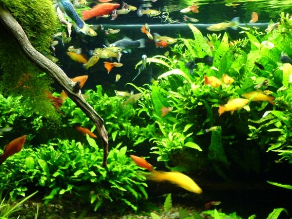 Velké akvárium 200x40x75 ( d, š, v )